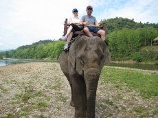 A dos d'elephantA