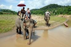 Elephant a Luang Prabang