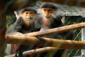 Primate au parc Cuc Phuong_s