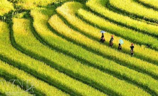 Vietnam complet en 28 jours
